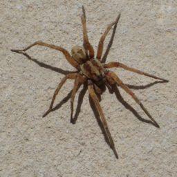 Уничтожение пауков в Салавате
