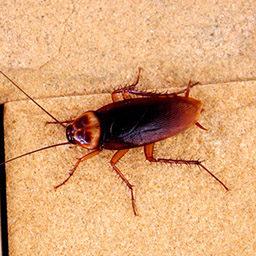 Уничтожение, выведение тараканов